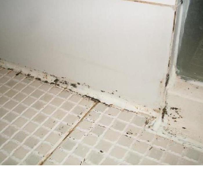 Mold Remediation Does your Trumbull County Home Have a Mold Problem?