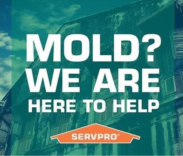 Mold Remediation DIY Mold Remover - Howland Ohio